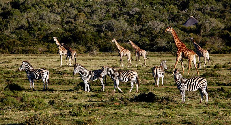 cape-town-safari